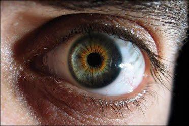 Resolution of Human Eye | Shahnawaz Alam's Blog Octopus Eye Vs Human Eye
